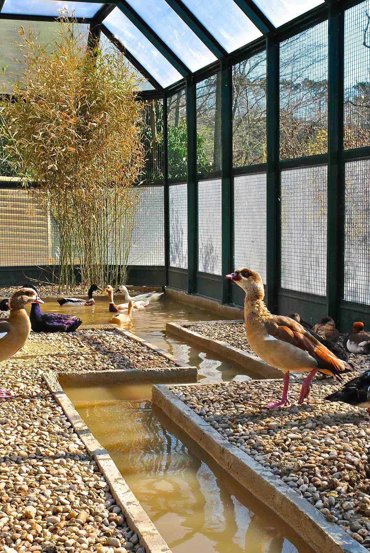 Basamenti e laghetti per zoo privato